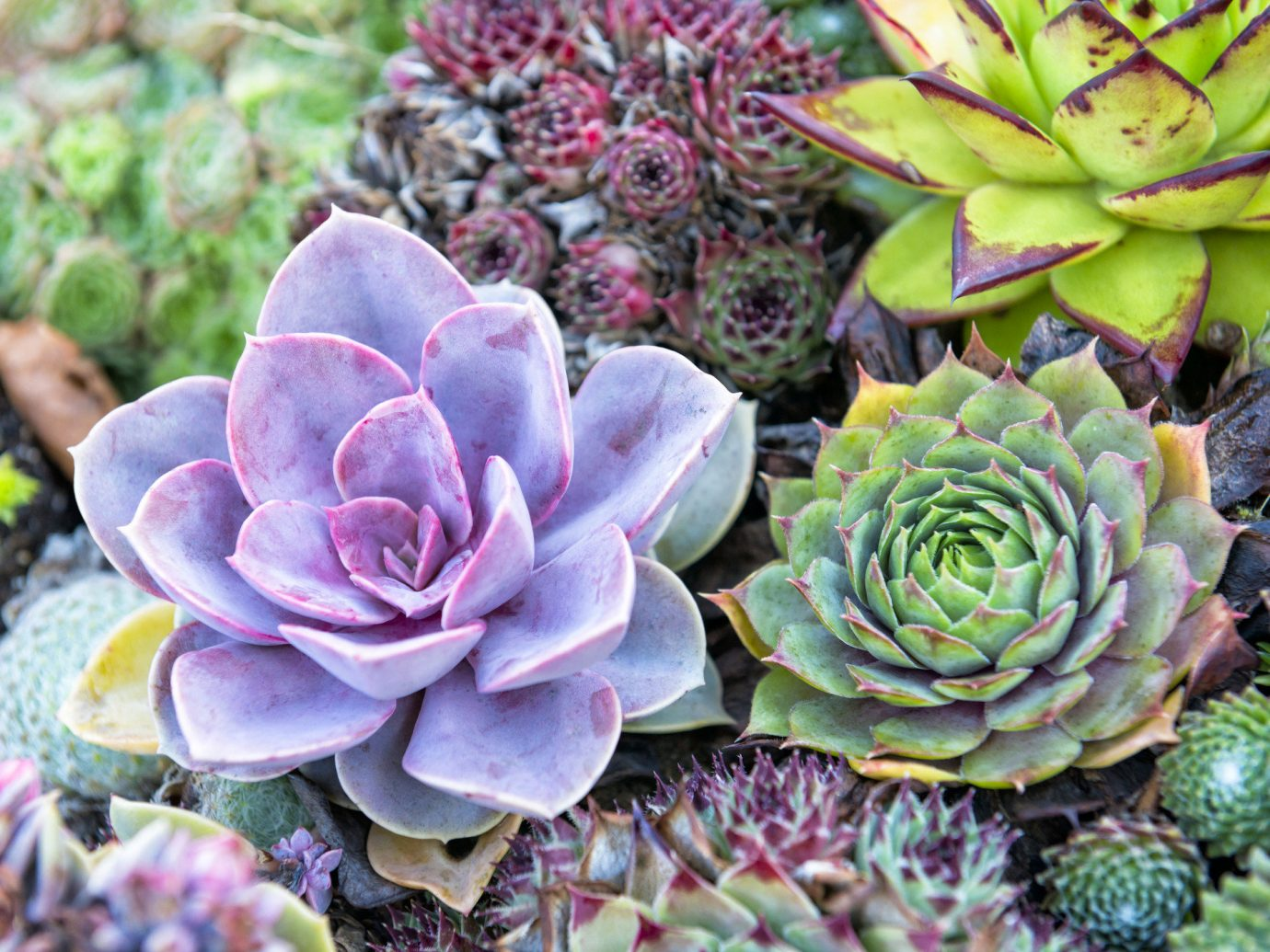 Cacti at the Moorten Botanical Garden