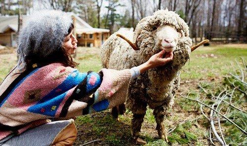 Style + Design grass outdoor person sheep sheeps