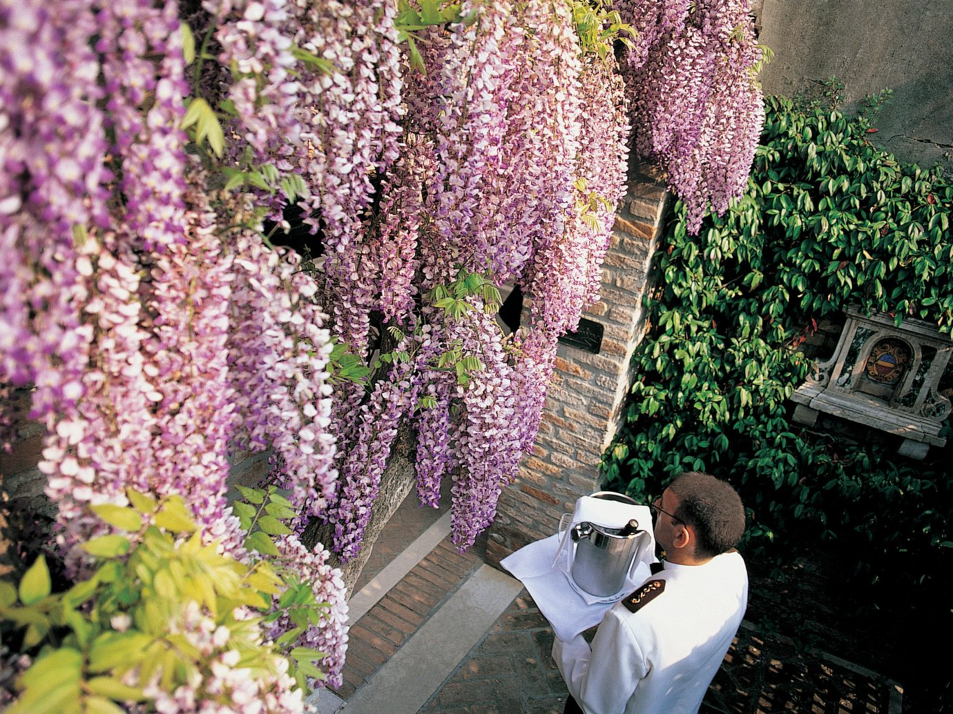 Celebs Hotels Trip Ideas flower plant purple spring flora Garden shrub tree