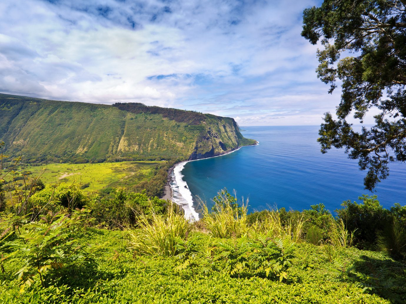Beach tree outdoor grass water highland sky Nature mountainous landforms landform geographical feature wilderness body of water mountain green Lake Coast hill cloud loch Sea River landscape cliff mountain range reservoir meadow fjord lush terrain ridge grassy hillside pond surrounded