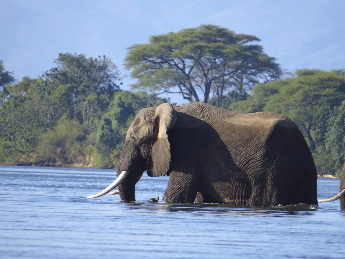 Offbeat elephant tree outdoor water animal sky indian elephant mammal elephants and mammoths fauna Wildlife River Lake african elephant Safari trunk