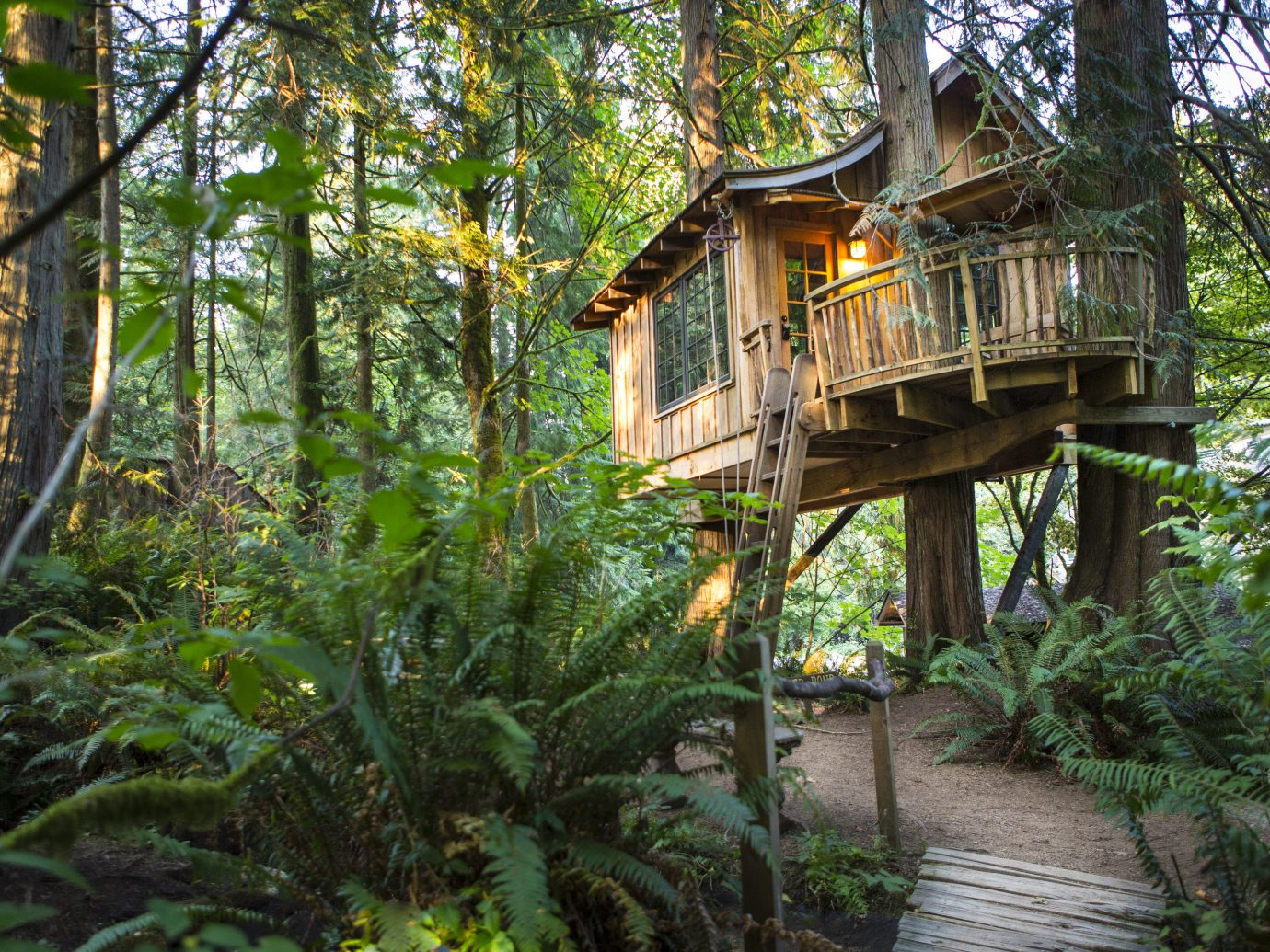 tree outdoor habitat wilderness natural environment building Forest botany tree house woodland rainforest Jungle outdoor structure trail flower Garden plant wood area wooded surrounded