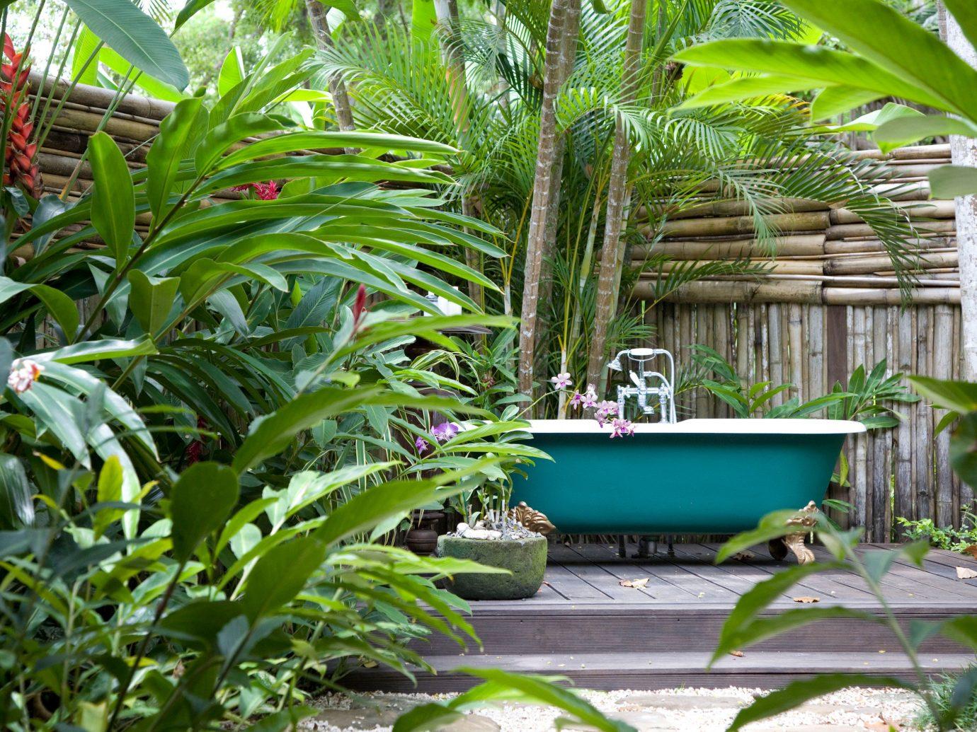Hotels Luxury Travel plant outdoor palm tree green Garden flora tropics botany flower Jungle rainforest arecales backyard palm family botanical garden Resort yard plantation lawn outdoor structure