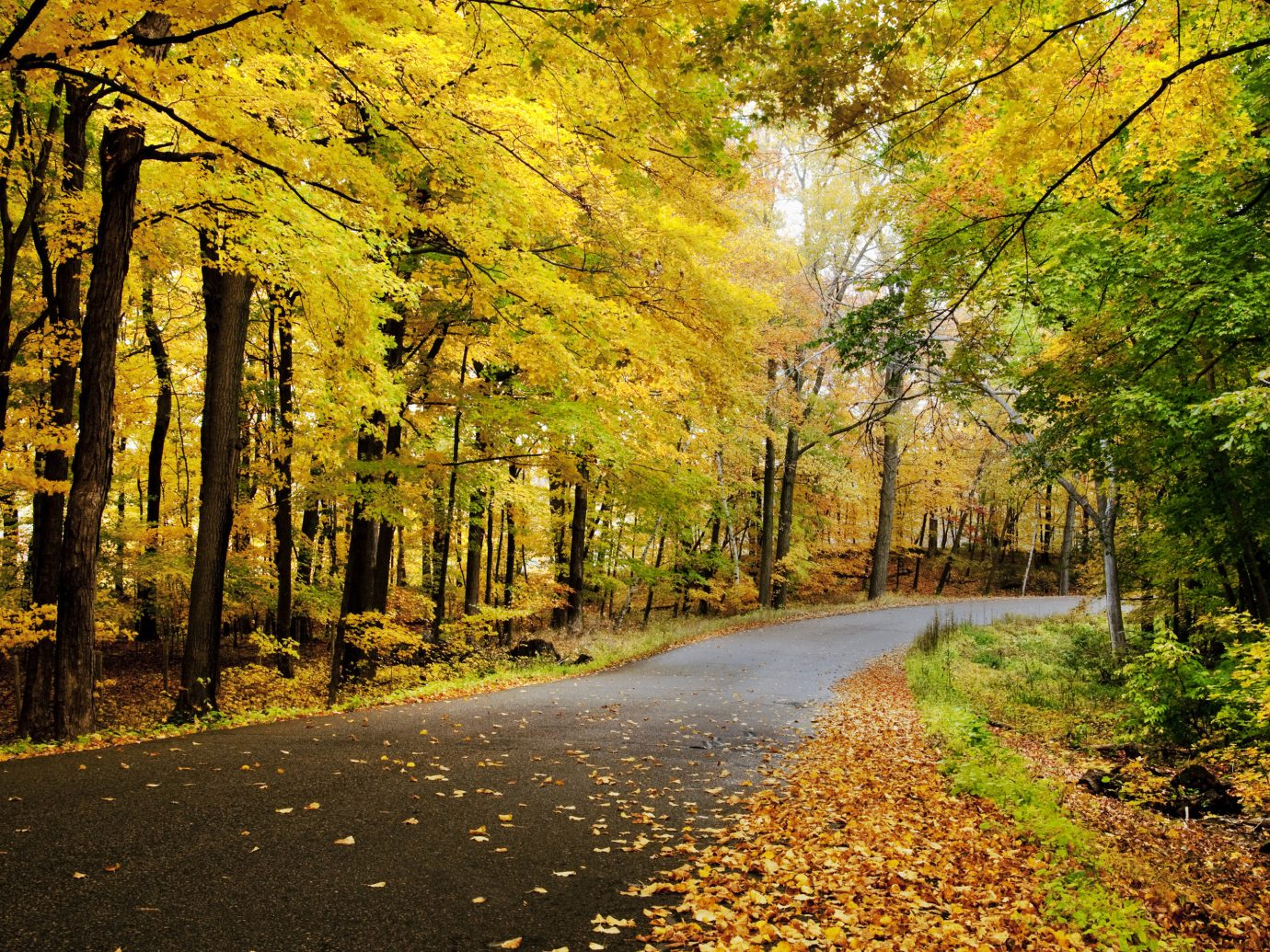 Outdoors + Adventure Road Trips Trip Ideas tree outdoor grass leaf Nature autumn yellow path woodland woody plant deciduous grove sunlight temperate broadleaf and mixed forest Forest branch morning sky maidenhair tree landscape plant evening spring computer wallpaper road way surrounded wooded