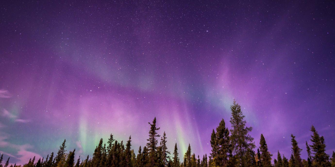 Health + Wellness Meditation Retreats Offbeat outdoor tree aurora night atmosphere slope Night Sky