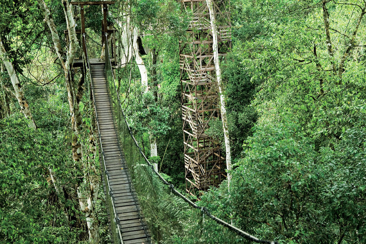Hotels tree outdoor habitat plant green Forest natural environment transport ecosystem woodland track rainforest old growth forest rolling stock Jungle canopy walkway trail wooded rope bridge bridge wetland wood birch lush surrounded
