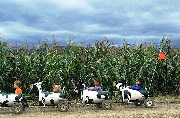 Trip Ideas tree outdoor sky grass agriculture field vehicle lawn rural area crop flower Farm palm