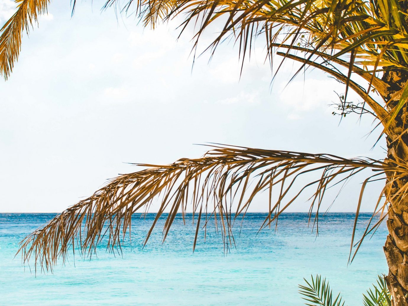 Beaches caribbean Sea tropics vacation tree palm tree sky arecales shore Beach Ocean Coast water tourism computer wallpaper