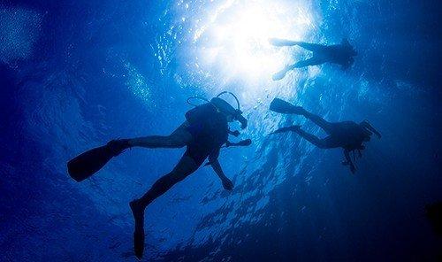 Food + Drink outdoor underwater diving marine biology freediving Sport water sport underwater sports diving Scuba Diving outdoor recreation dark biology recreation clouds ocean floor