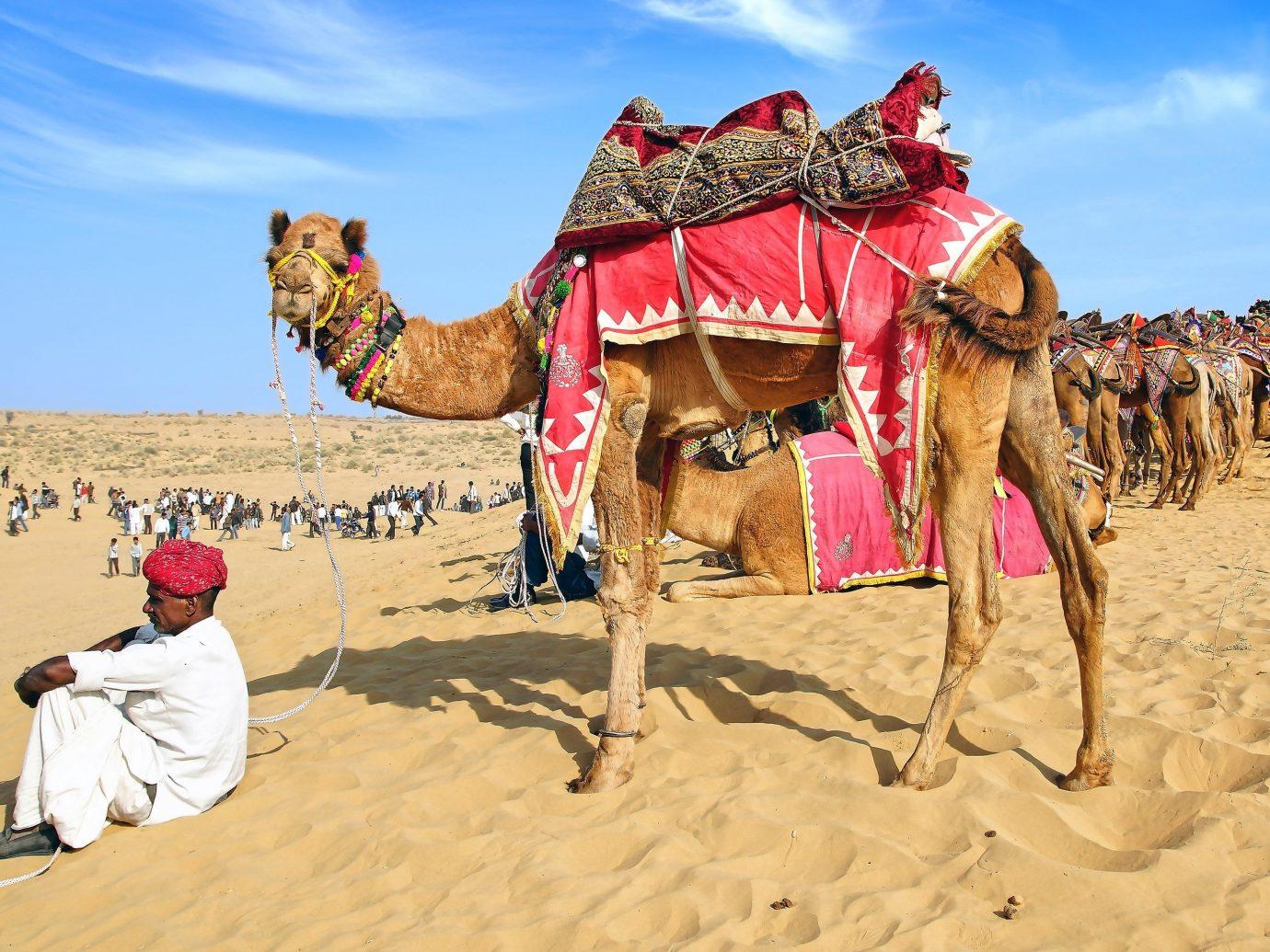 Jetsetter Guides sky Camel outdoor natural environment camel like mammal arabian camel sahara Desert landscape aeolian landform erg sand several