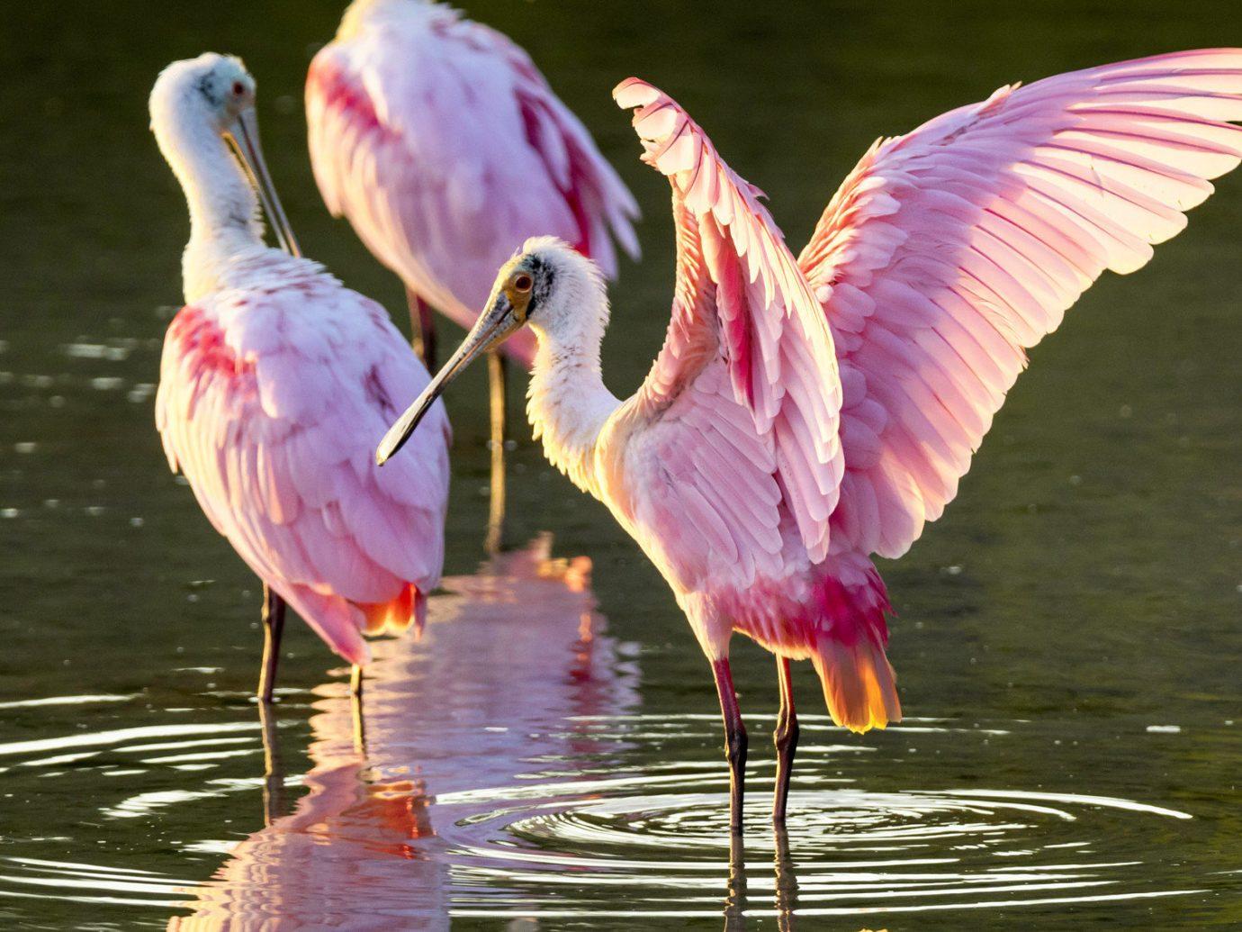 Hotels Secret Getaways Trip Ideas Bird water animal Nature beak vertebrate outdoor fauna flamingo spoonbill Wildlife water bird aquatic bird reflection wing flower colored