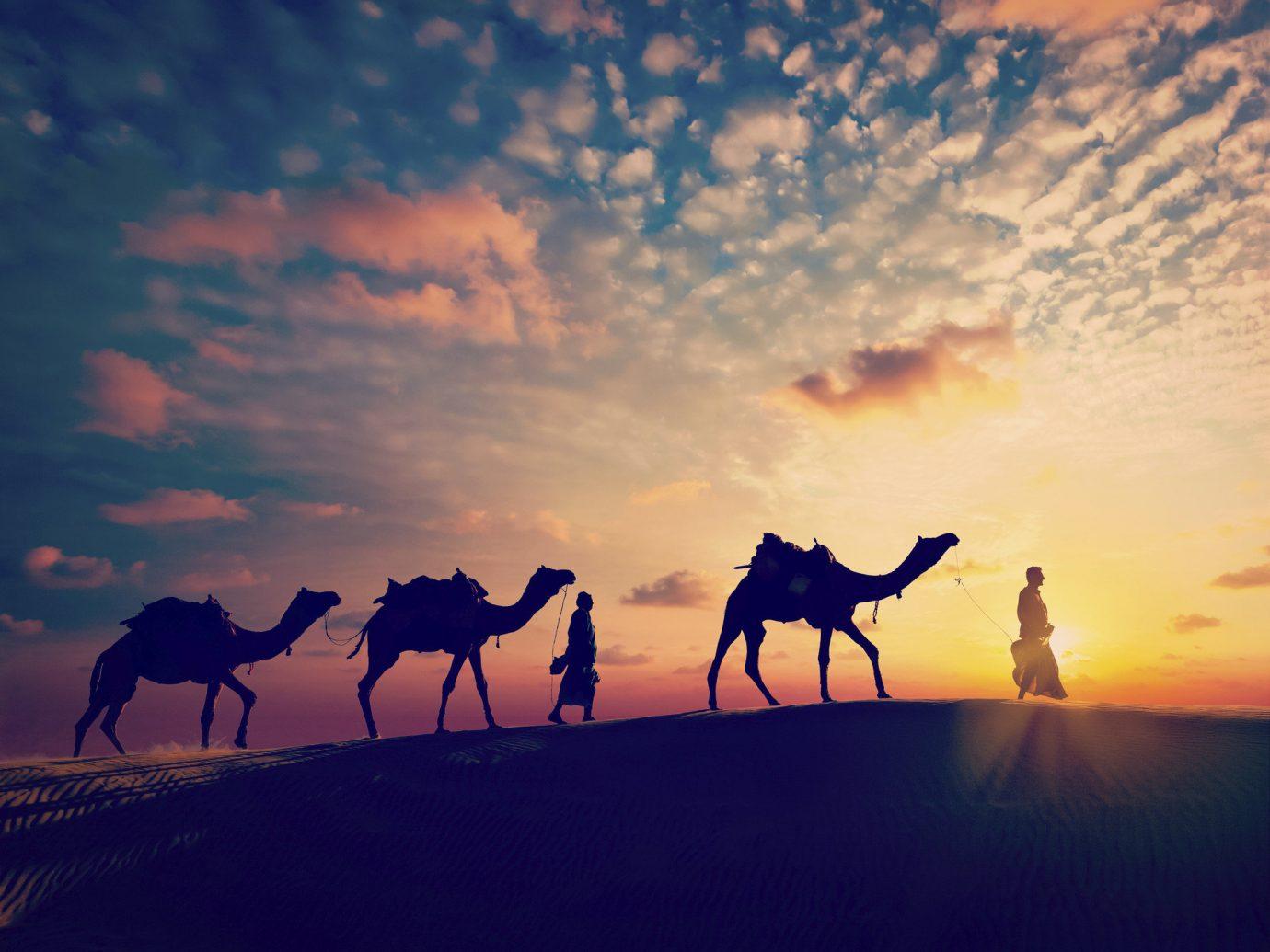 Trip Ideas sky outdoor natural environment Sunset Camel landscape morning sunrise evening plain dawn dusk horse like mammal Desert camel like mammal clouds