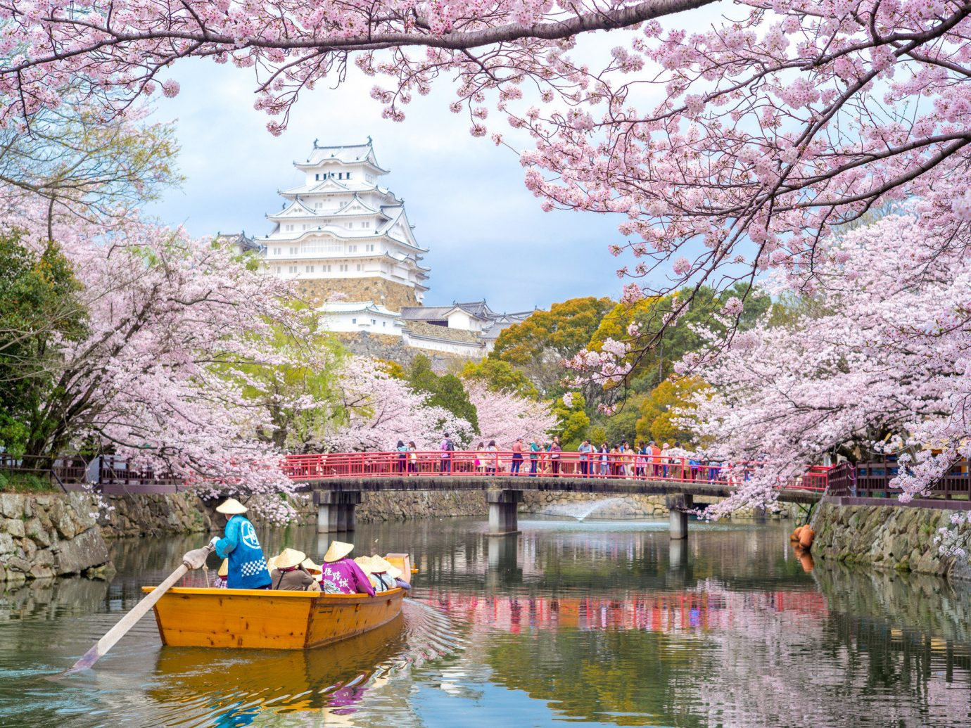 Arts + Culture Festivals + Events Hotels Offbeat Travel Tips Trip Ideas tree water outdoor River Boat flower cherry blossom plant season blossom yellow traveling colorful colored