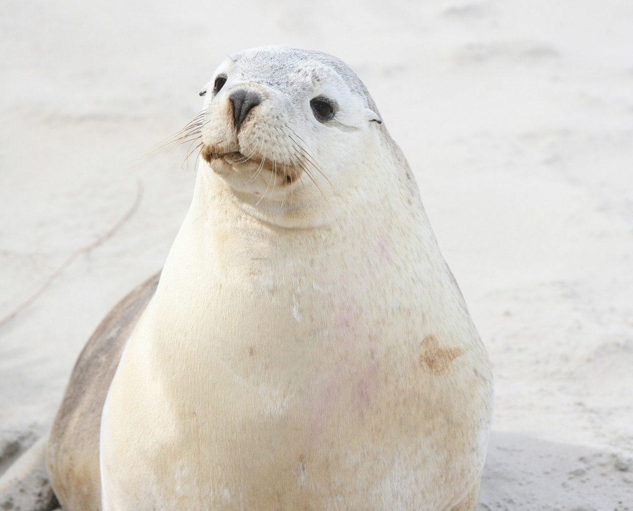 Hotels animal aquatic mammal seal mammal harbor seal ground seals outdoor vertebrate marine mammal fauna Wildlife laying sand sandy