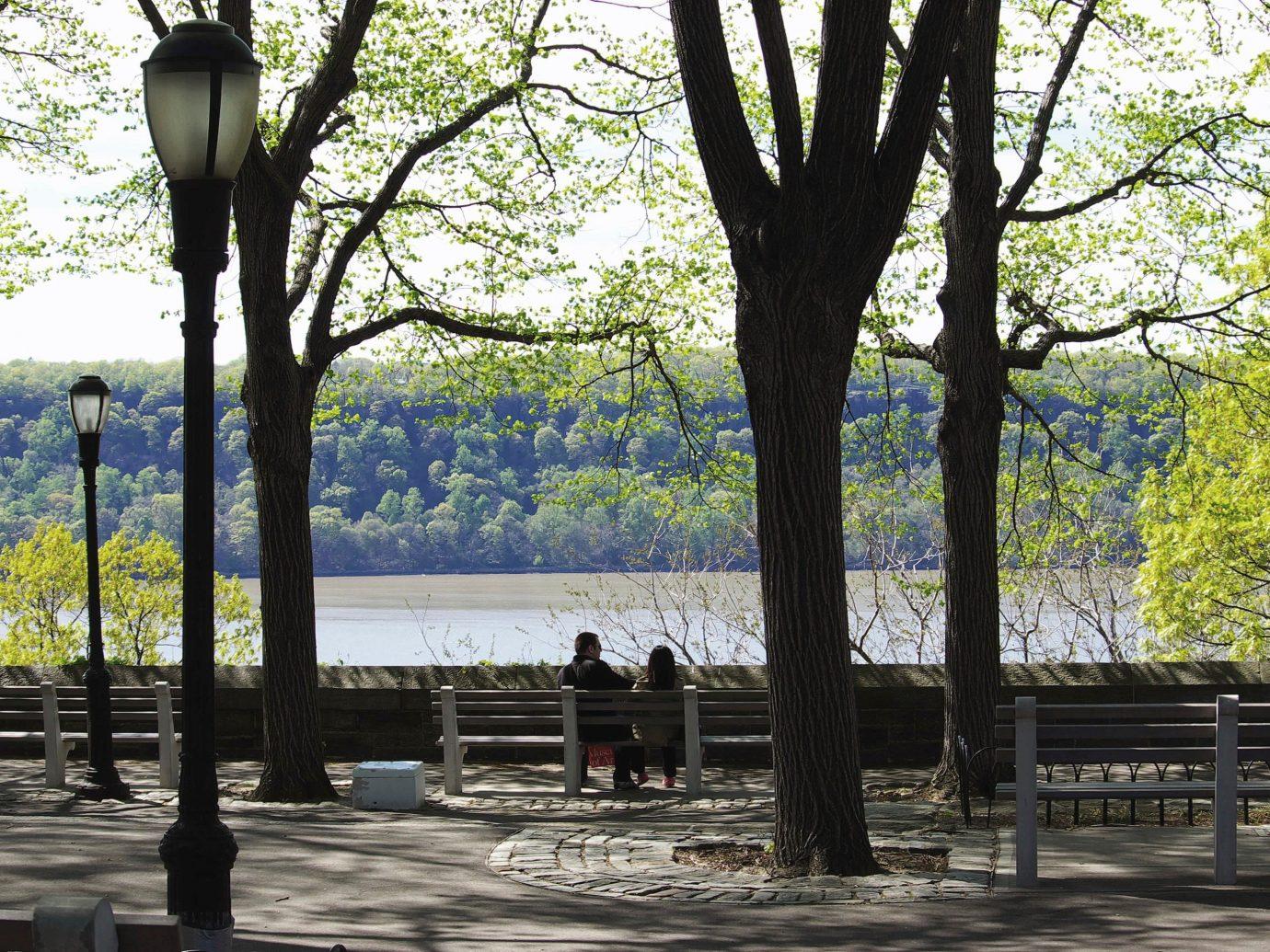 Trip Ideas tree outdoor park season woody plant walkway shade day