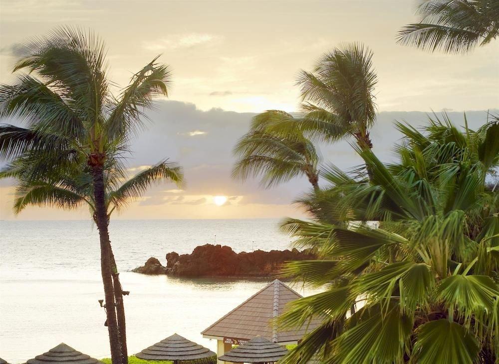 Jetsetter Guides tree outdoor water plant palm Beach palm family caribbean Sea Coast Ocean vacation tropics arecales shore woody plant bay Resort sandy shade