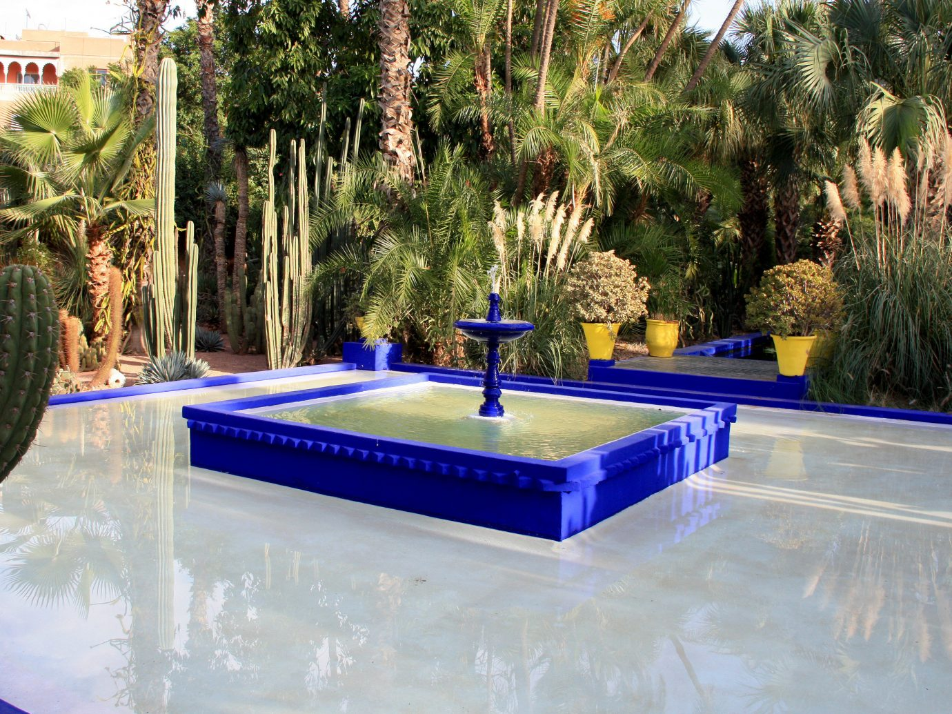 Trip Ideas tree swimming pool water leisure majorelle blue plant water feature Resort table amenity recreation colorful colored