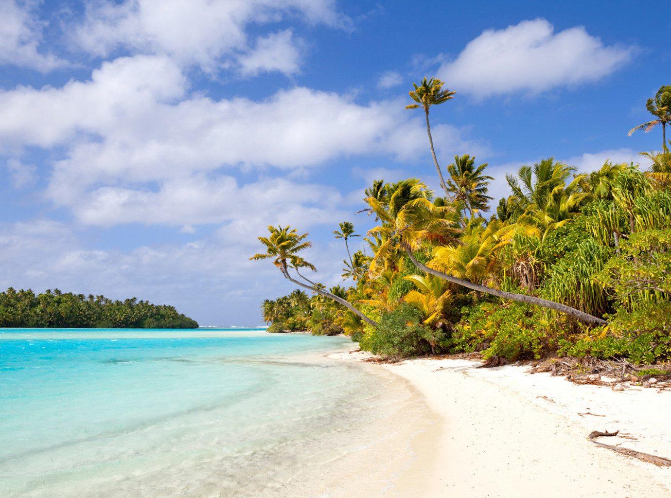 Trip Ideas sky outdoor tree Beach Nature landform shore body of water Sea Coast Ocean vacation caribbean tropics arecales Island bay sand flower Lagoon blue sandy day