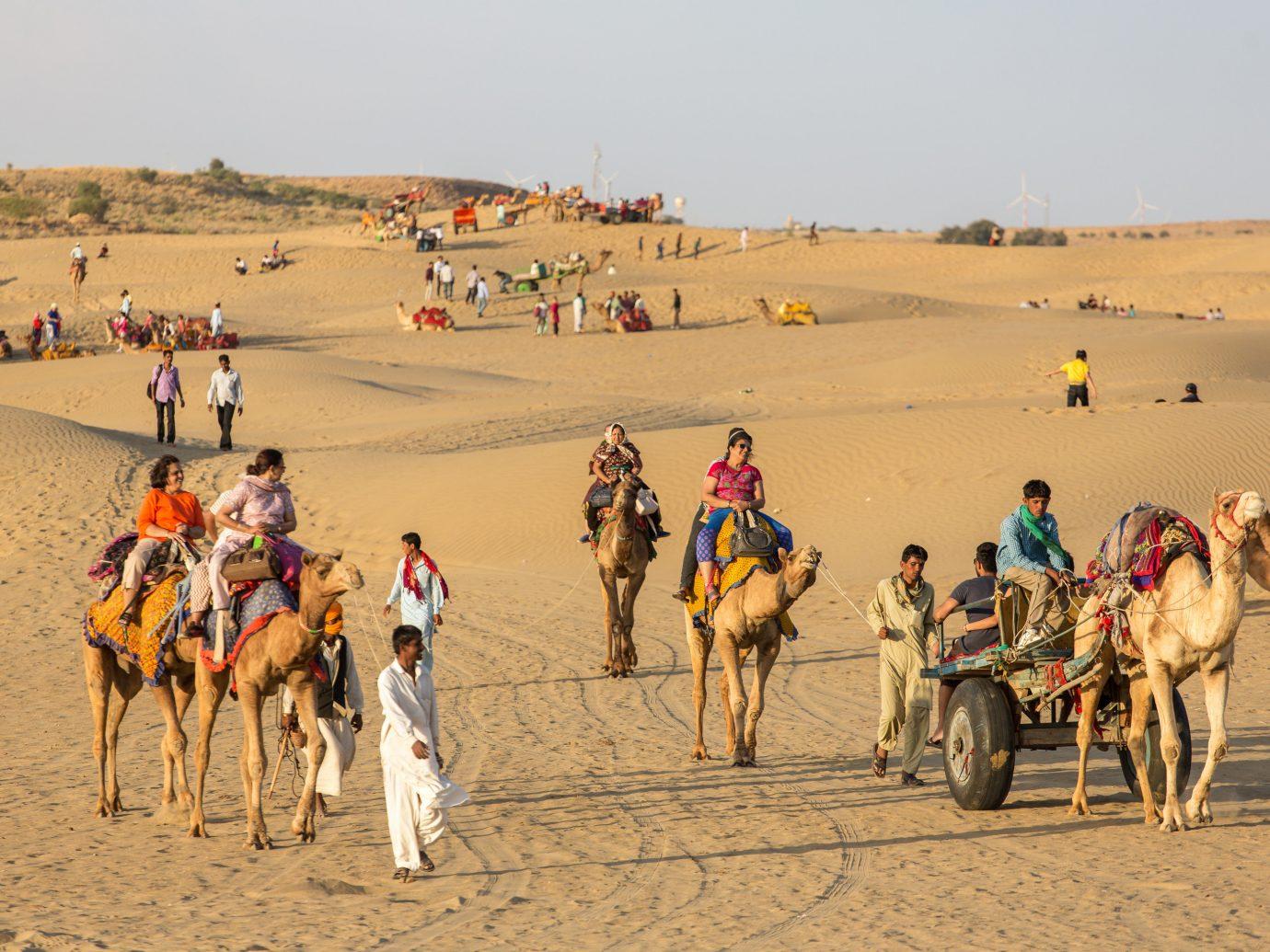 India Jaipur Jodhpur Trip Ideas Camel arabian camel camel like mammal sand sahara Desert erg pack animal tourism landscape ecoregion aeolian landform vacation