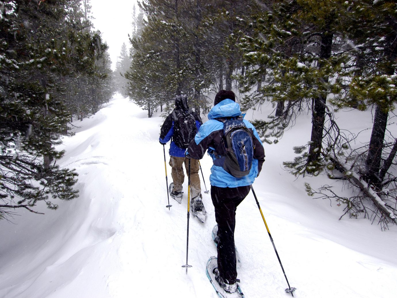 Jetsetter Guides outdoor tree snow skiing footwear cross Winter Country trail cross country skiing snowshoe path sports nordic skiing winter sport outdoor recreation Ski wood recreation ski equipment wooded ski touring Forest ski slope