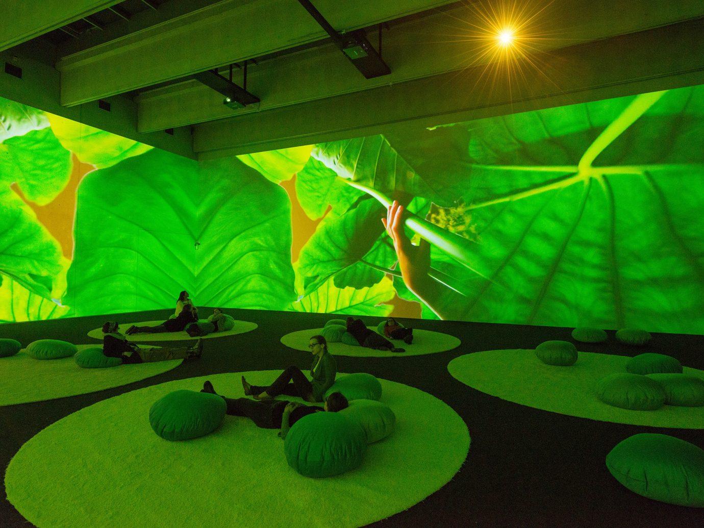Trip Ideas green indoor ceiling light laser screenshot flower
