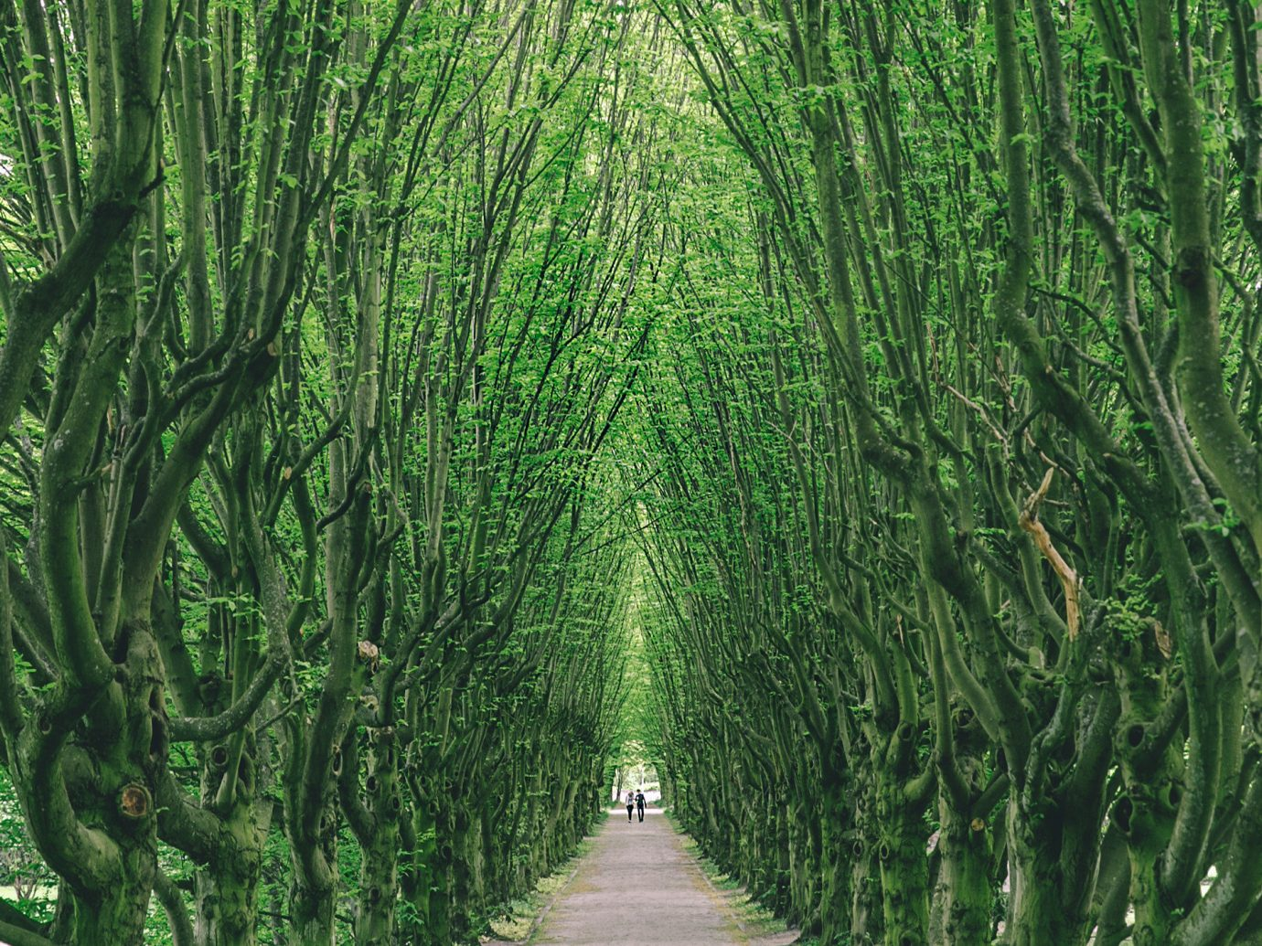 Travel Tips tree outdoor habitat green Nature plant vegetation natural environment ecosystem Forest grass botany woodland leaf woody plant arecales grass family rainforest sunlight Jungle plantation plant stem deciduous bamboo flower temperate coniferous forest