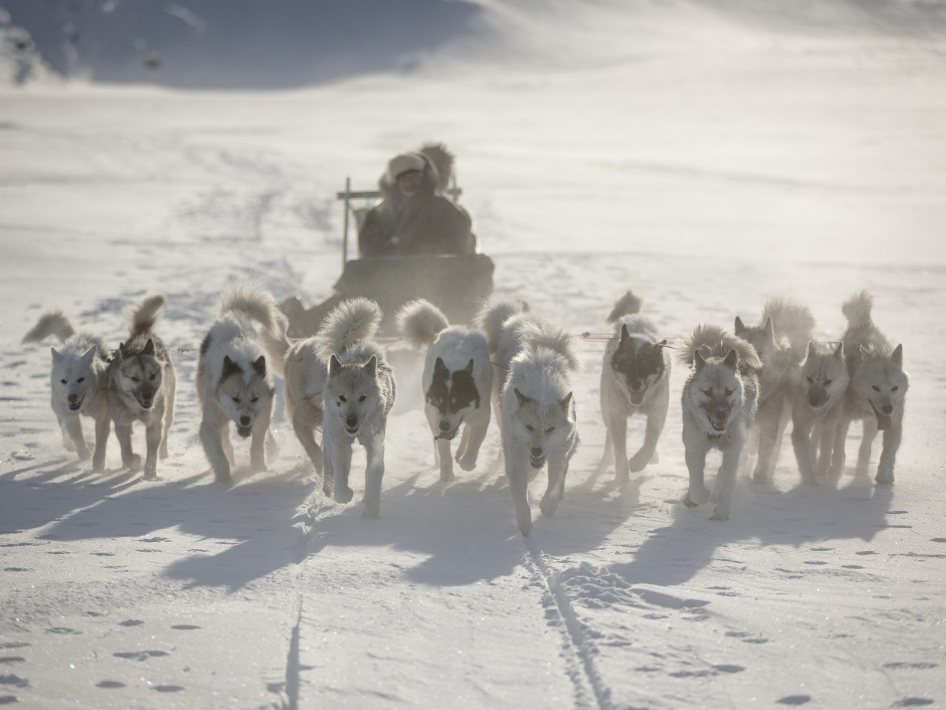 A pack of dogs and their musher on a trail near Ilulissat