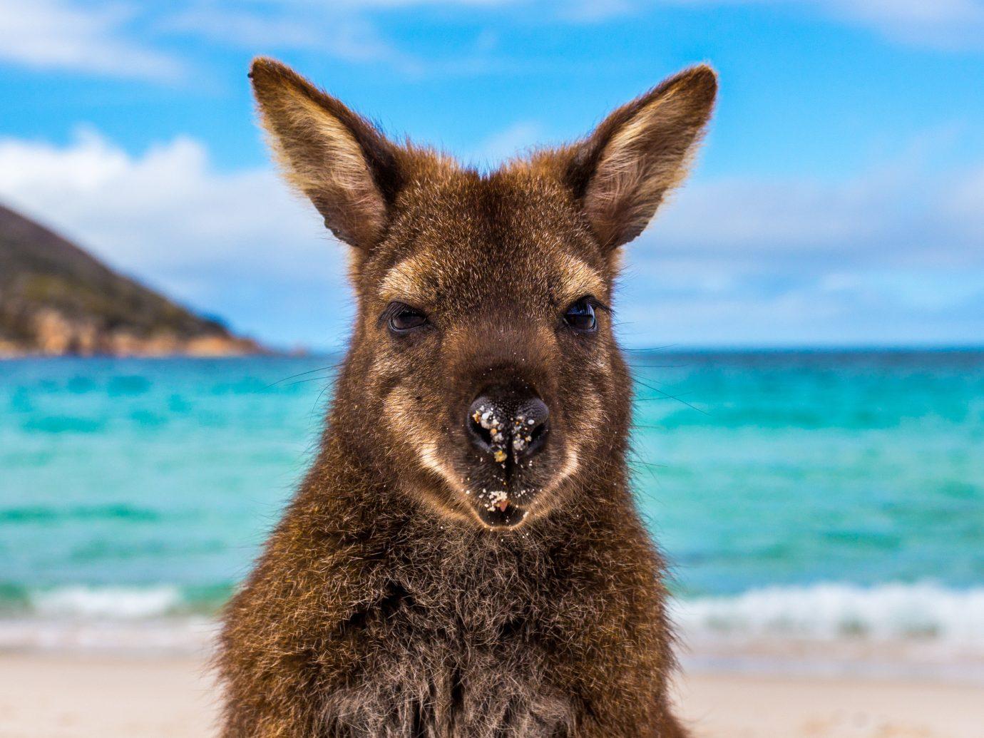 Adventure Off-the-beaten Path Trip Ideas sky animal mammal outdoor kangaroo vertebrate Wildlife fauna Beach wallaby macropodidae marsupial