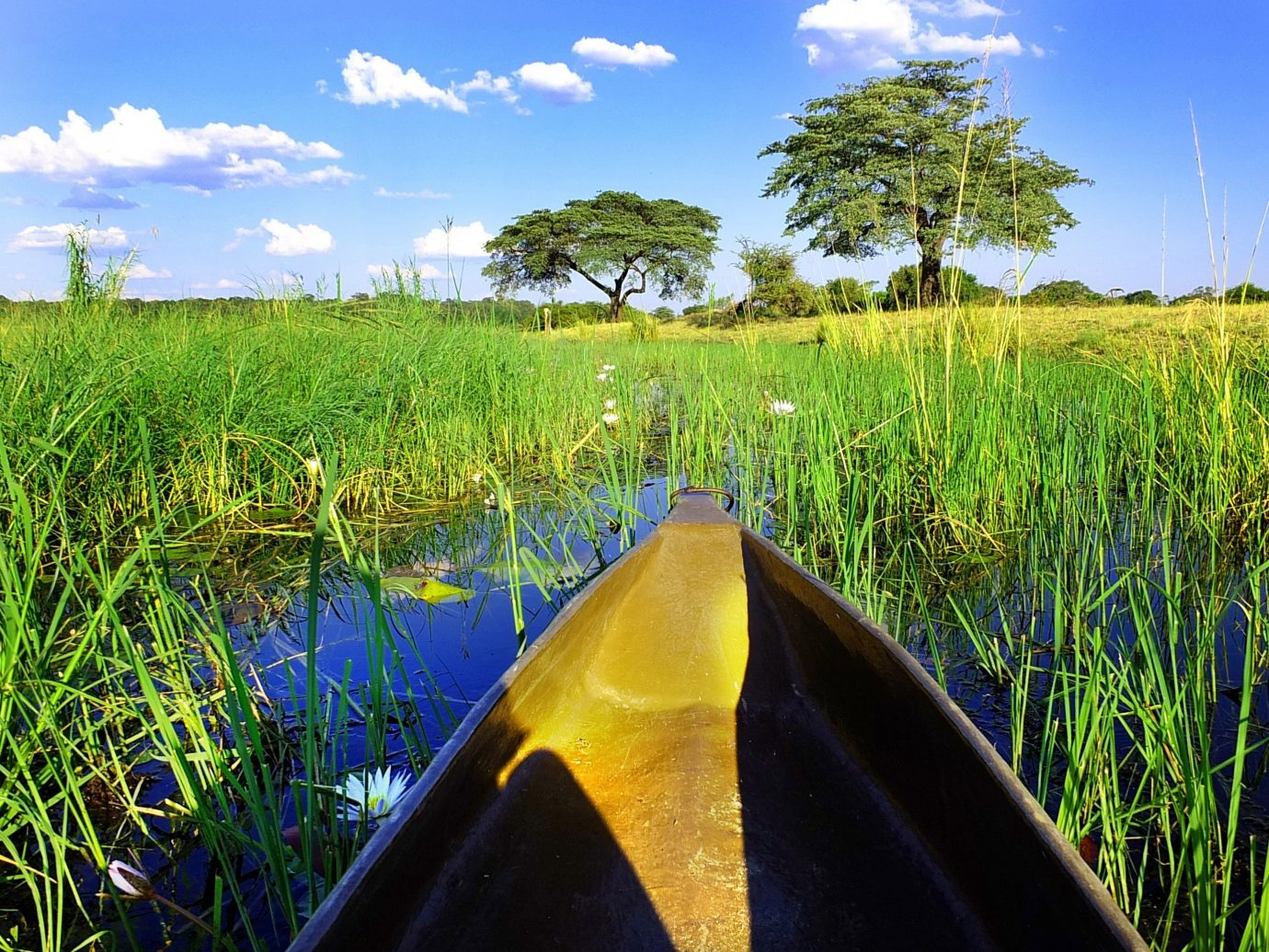 Health + Wellness Trip Ideas sky grass outdoor habitat Nature geographical feature green natural environment ecosystem field agriculture paddy field wetland rural area meadow yellow grass family crop flower sunlight outdoor object