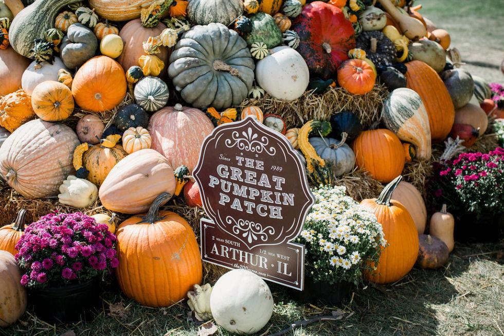 Arts + Culture outdoor pumpkin autumn carving holiday vegetable halloween fresh