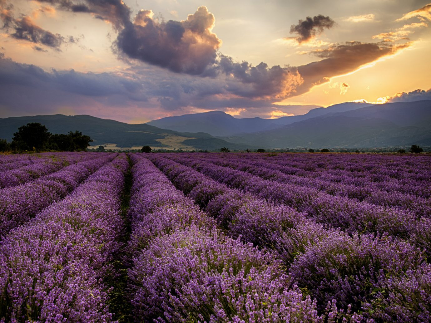 Flowers in Provence in South of France