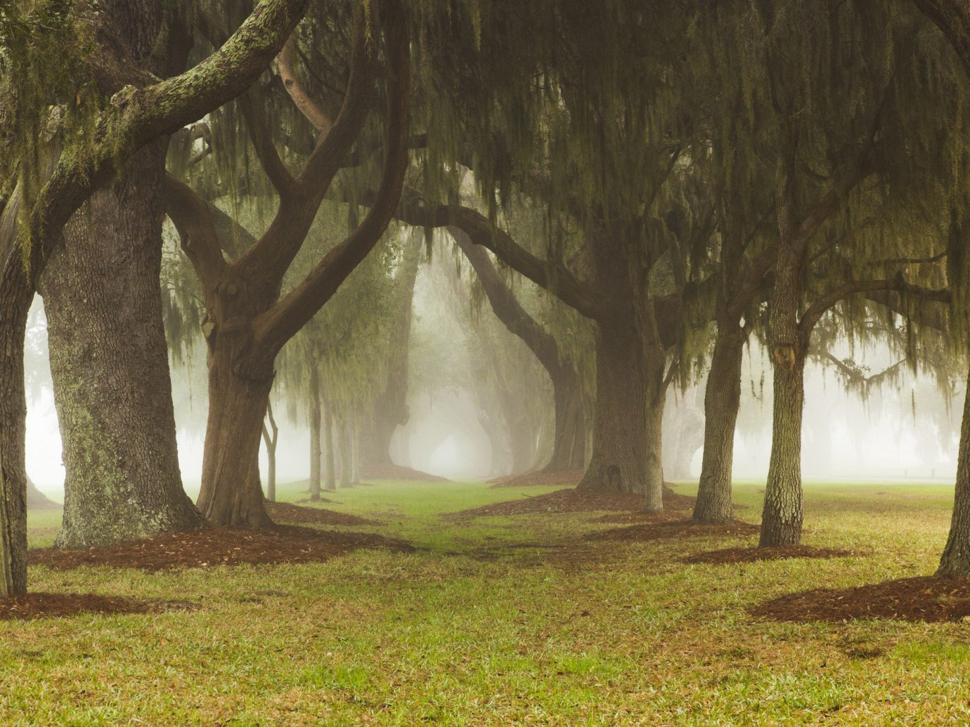 Trip Ideas grass tree outdoor habitat plant Nature willow natural environment Forest atmospheric phenomenon woodland green field sunlight morning woody plant mist leaf park branch Jungle autumn shade lush distance