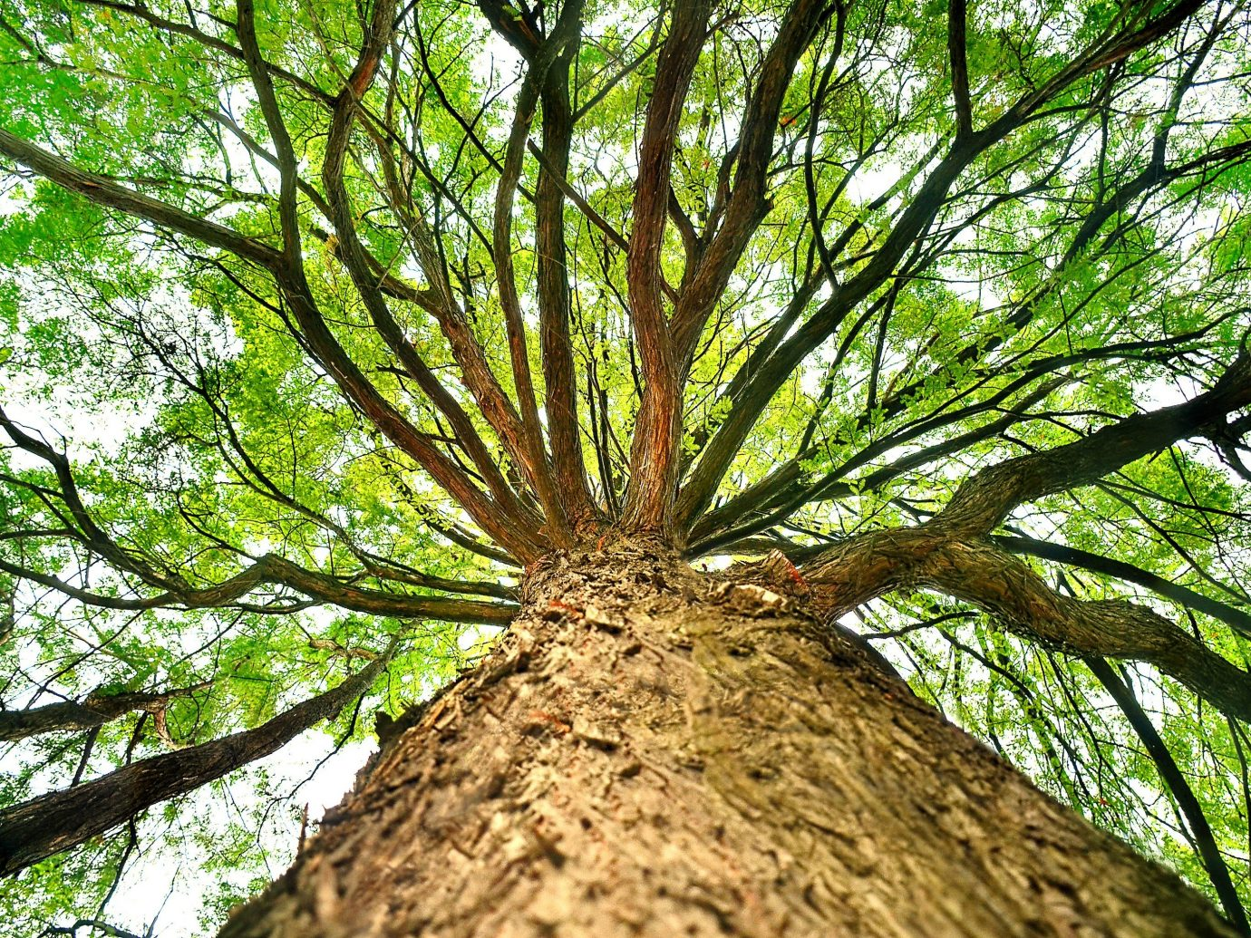 Trip Ideas tree outdoor plant habitat vegetation flora natural environment ecosystem Forest botany trunk branch leaf land plant woody plant arecales rainforest woodland flower old growth forest willow Jungle deciduous flowering plant plant stem oak wooded