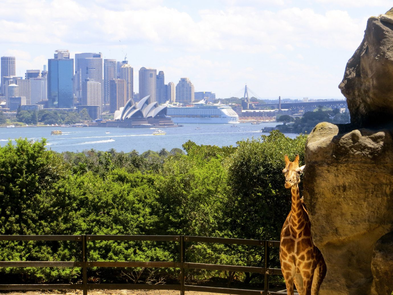 Trip Ideas outdoor giraffe sky tree landmark City park tourism vacation rock Sea Coast skyline travel overlooking