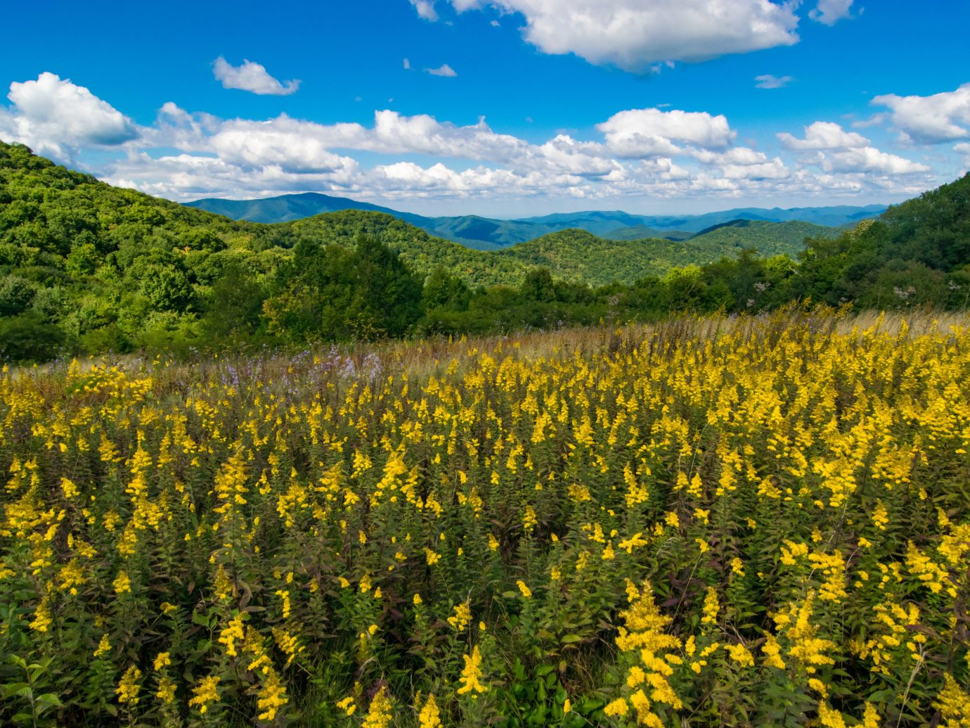 Trip Ideas wildflower wilderness vegetation ecosystem yellow flower field nature reserve meadow sky prairie grassland mountain shrubland landscape tree mount scenery biome national park hill grass mustard plant plant community spring plant rapeseed cloud ecoregion crop agriculture Forest canola