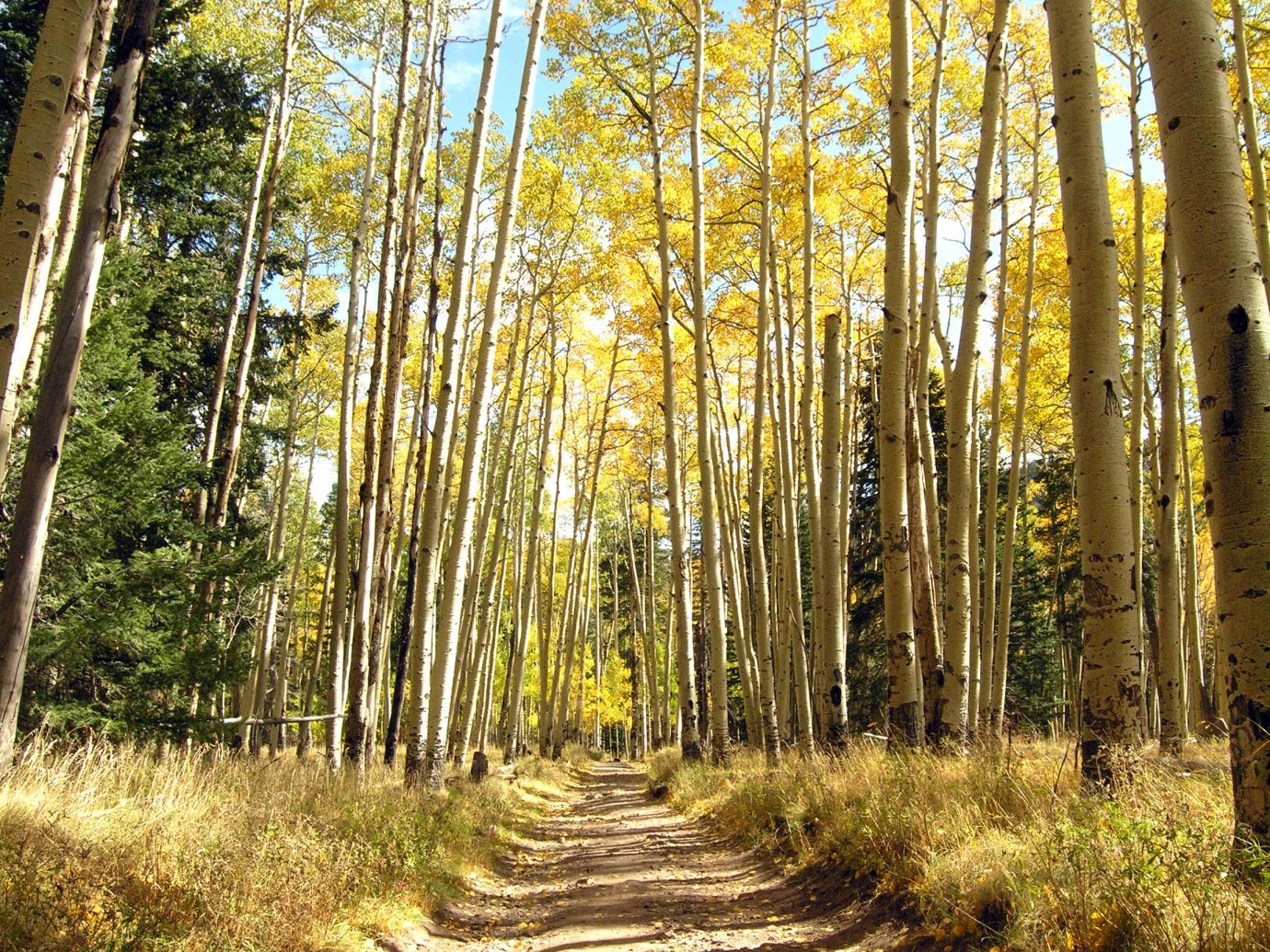 Trip Ideas tree outdoor habitat plant natural environment woodland ecosystem Forest grove season woody plant sunlight leaf autumn park poplar trail deciduous area wooded wood surrounded