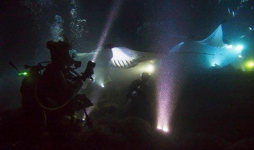 Outdoors + Adventure rock concert light darkness stage dark concert screenshot underwater special effects lamp ocean floor