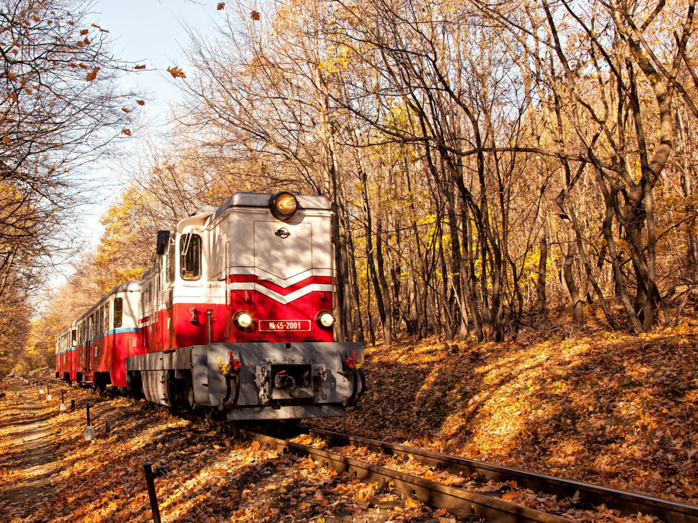 autumn Fall fall colors Fall leaves foliage rail railroad train transportation Trip Ideas tree track outdoor transport vehicle season rolling stock rail transport Winter Forest traveling wooded
