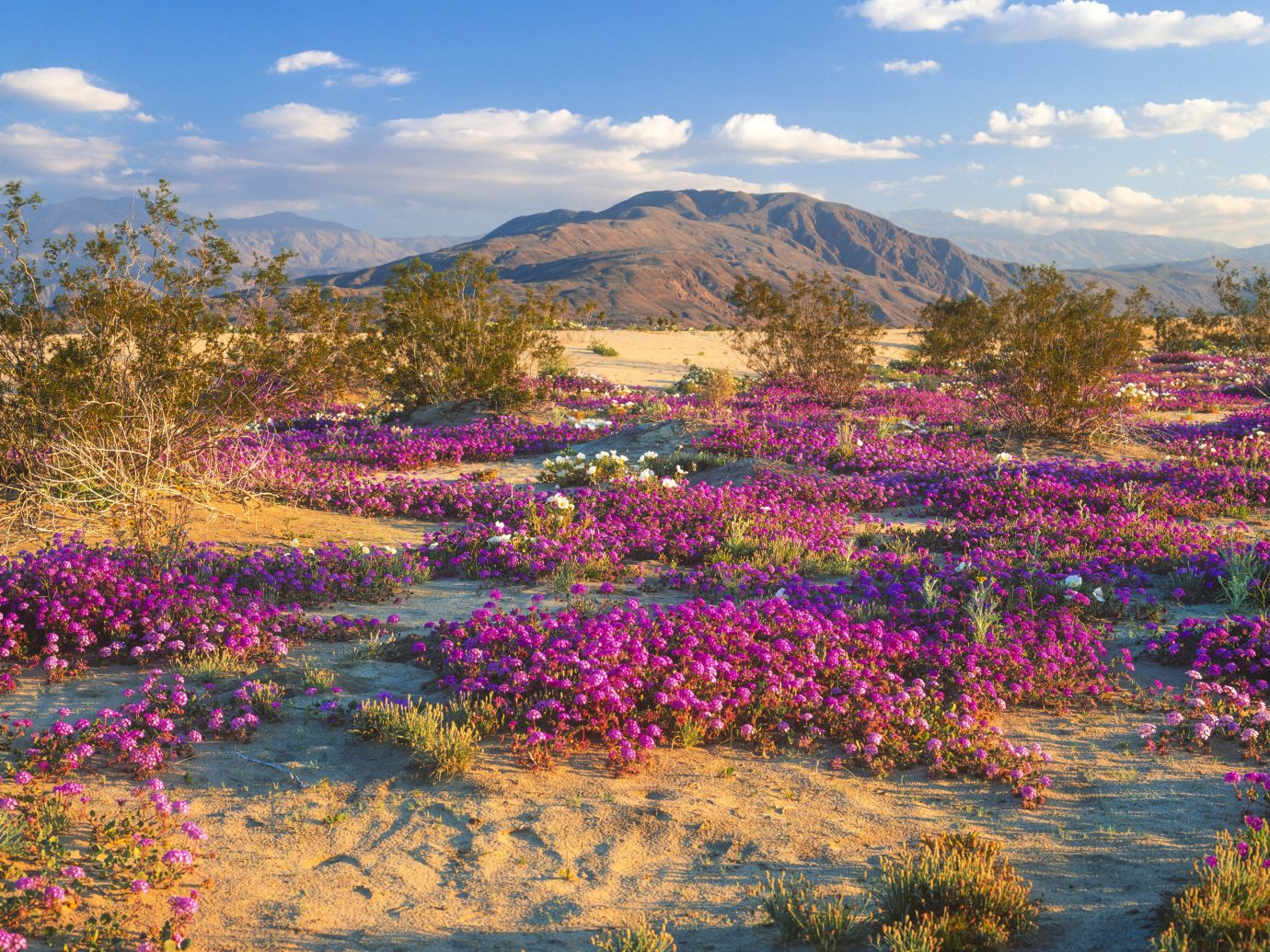 Trip Ideas outdoor grass sky flower Nature flora wilderness ecosystem tree plant meadow mountain wildflower land plant prairie Lake landscape woodland autumn flowering plant pond blossom lupin colorful surrounded distance field