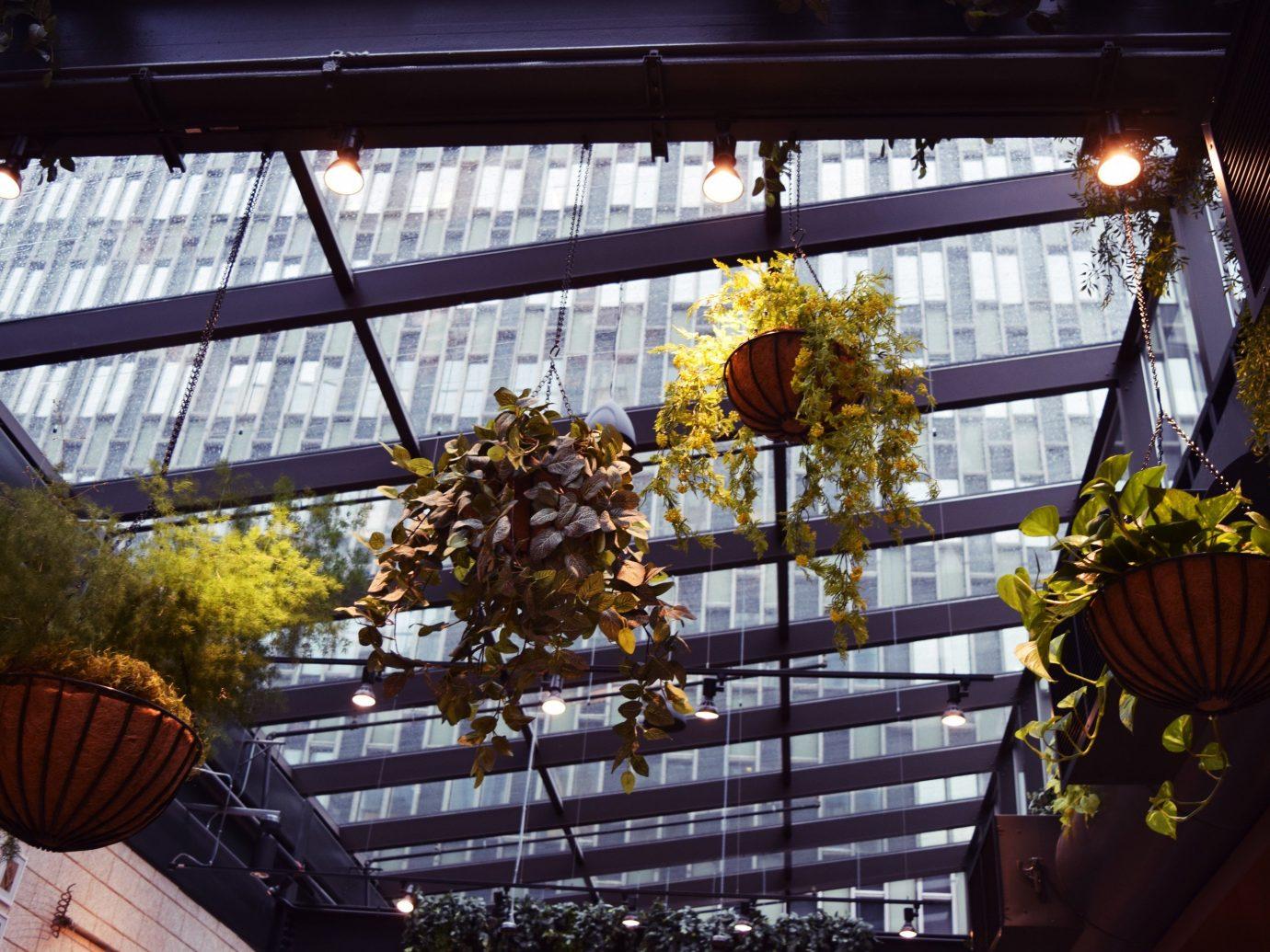 Plants hanging from the season in Terra in Boston