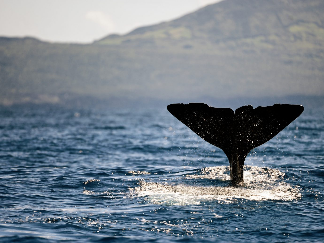 Portugal Trip Ideas water Sea marine mammal Ocean whales dolphins and porpoises whale sky Wildlife wave calm