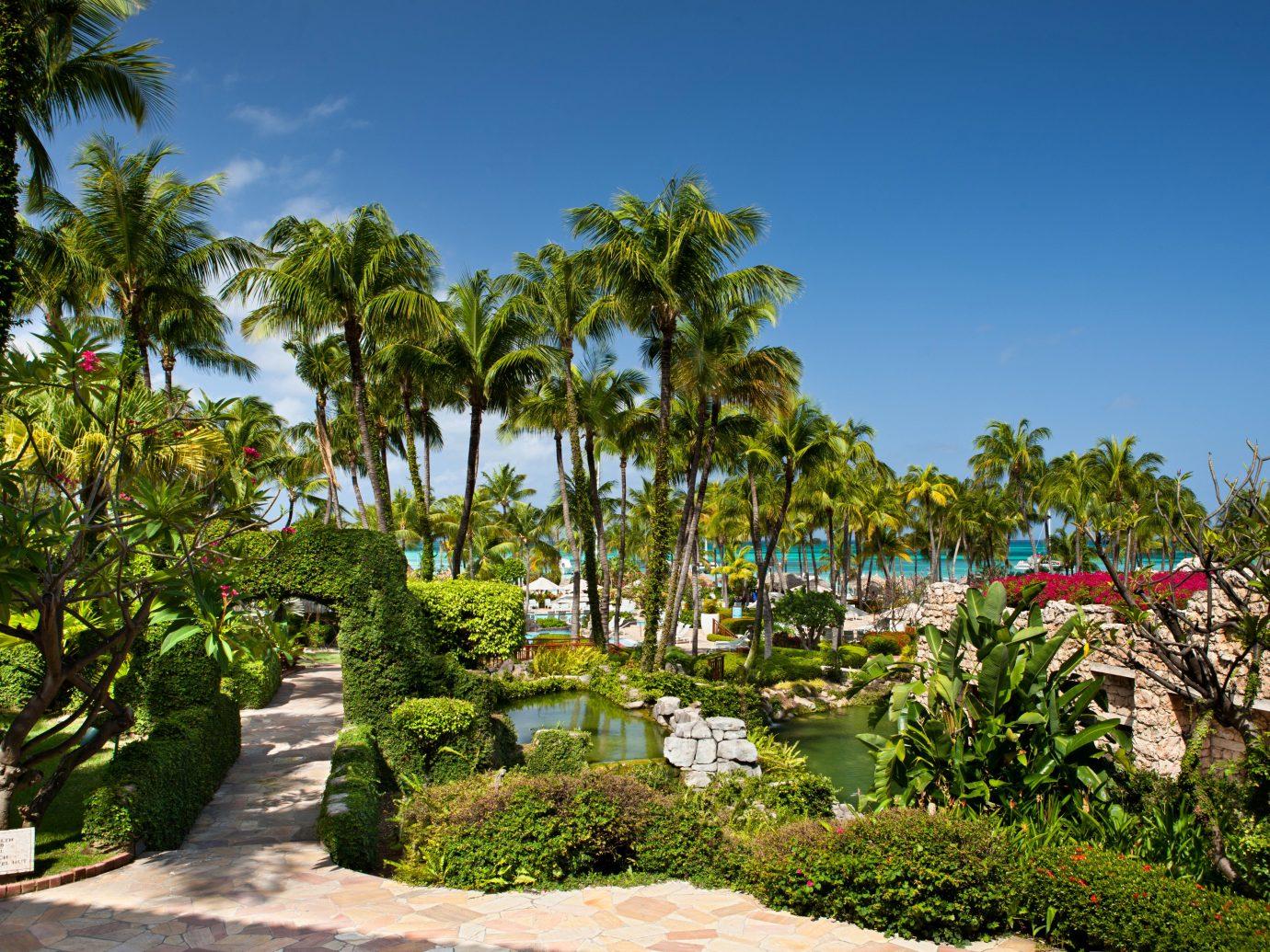 Aruba Beachfront caribbean Casino Classic Grounds Hotels Resort Tropical tree outdoor sky flora ecosystem botany plant Garden arecales flower tropics palm estate palm family botanical garden park Jungle lined