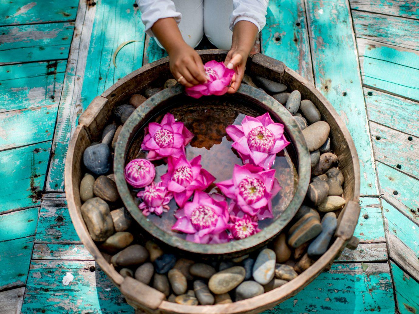 Hotels color spring flower food