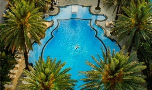 Hotels plant ecosystem swimming pool palm arecales tree Jungle flower