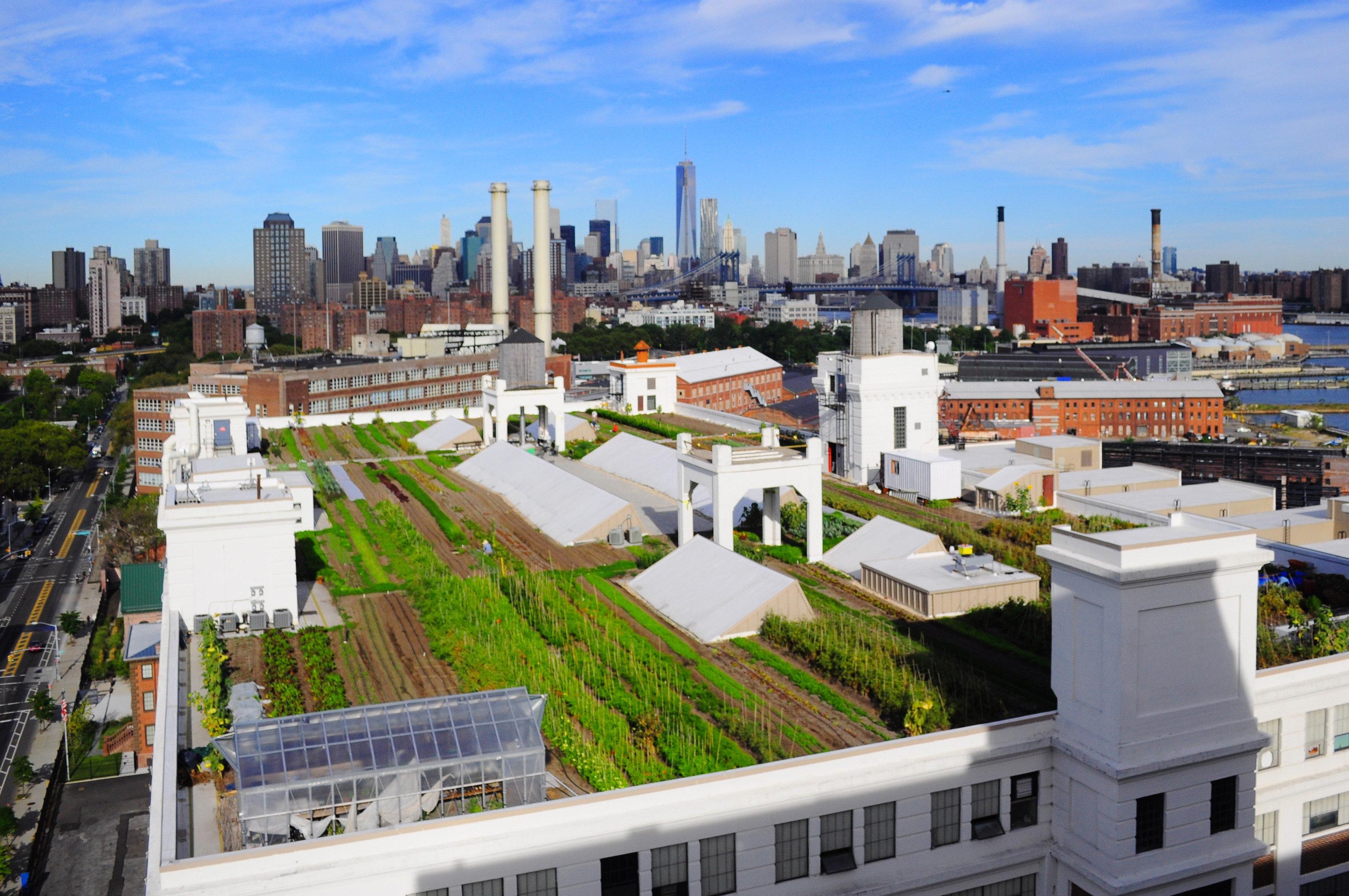 Brooklyn Grange Produce - largest rooftop soil farm