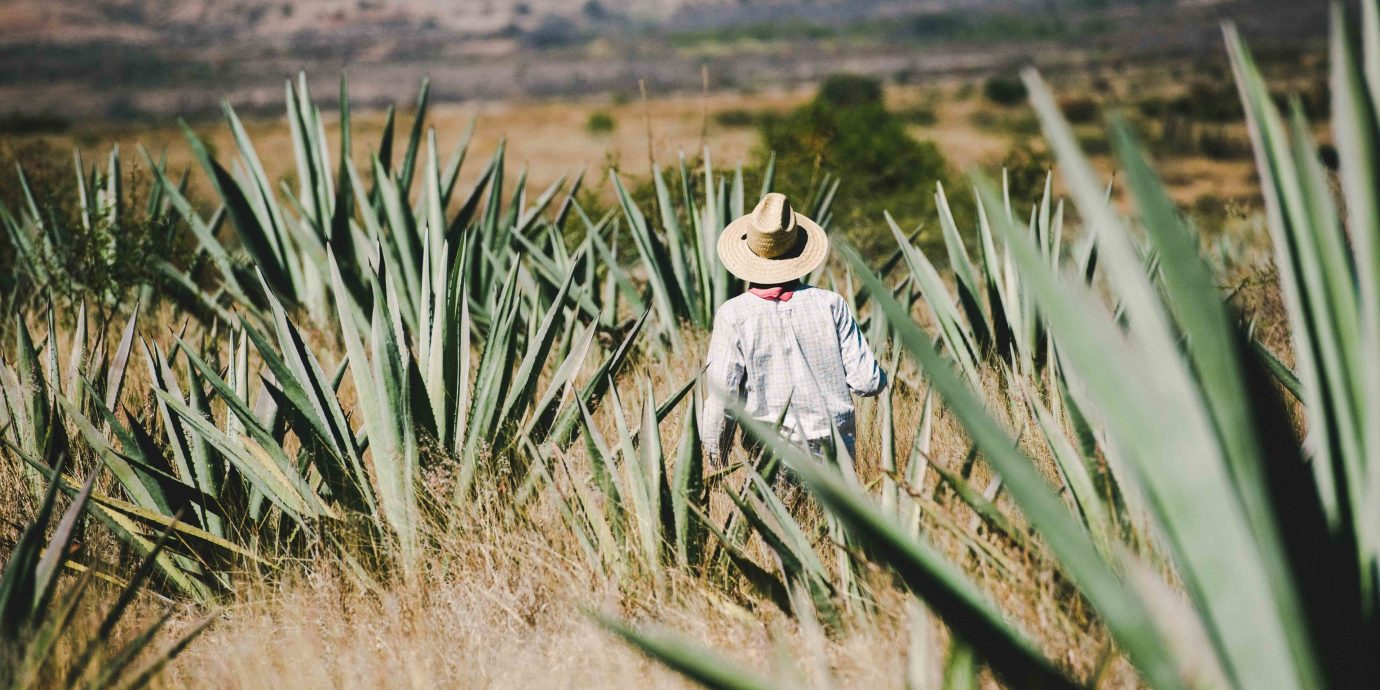 Arts + Culture Mexico Oaxaca Trip Ideas grass outdoor grass family field plant agave crop prairie ecoregion phragmites tree landscape agriculture shrubland plantation plant community commodity dry