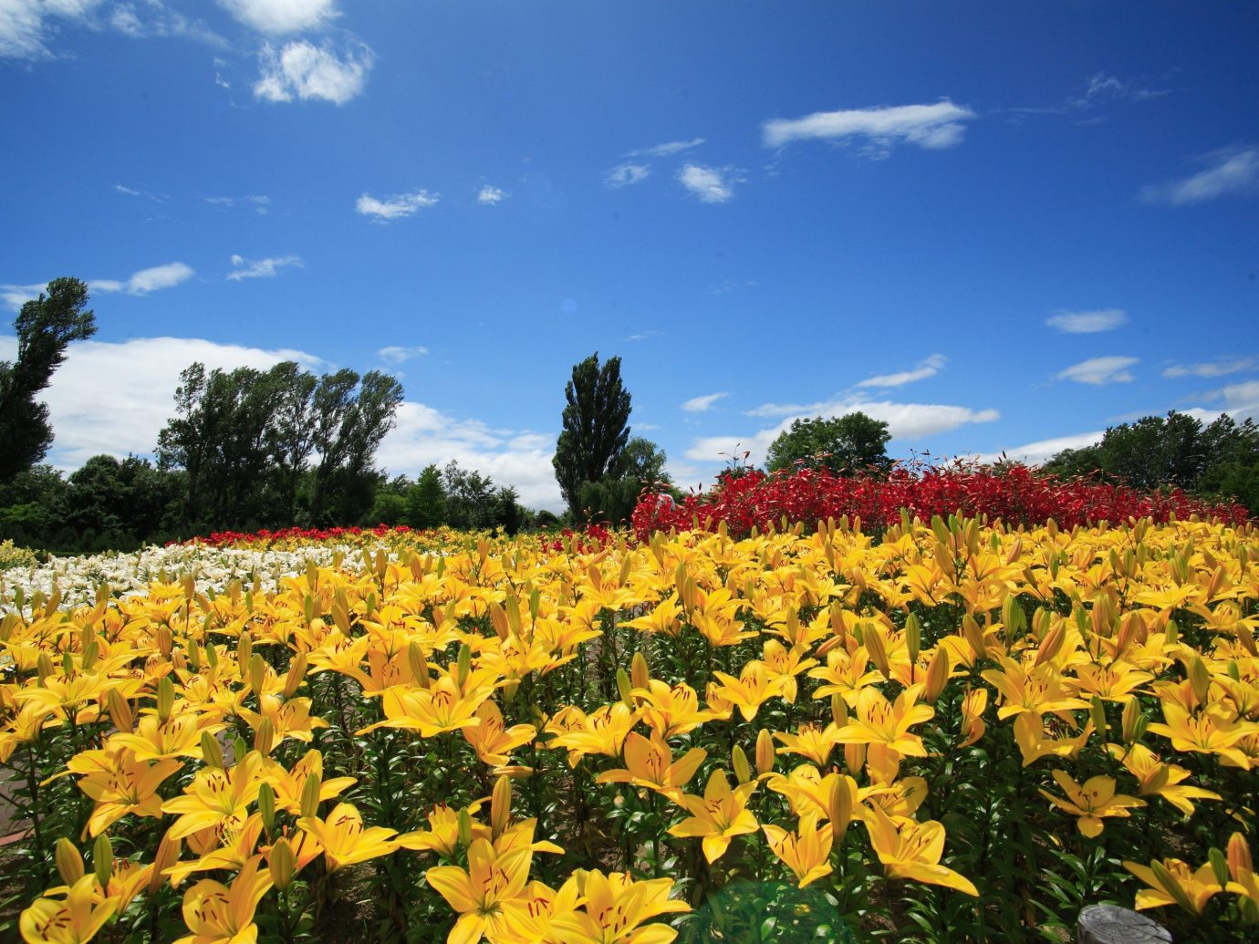 Arts + Culture Festivals + Events Travel Tips sky flower plant outdoor ecosystem field sunflower land plant agriculture daisy family flowering plant meadow wildflower day