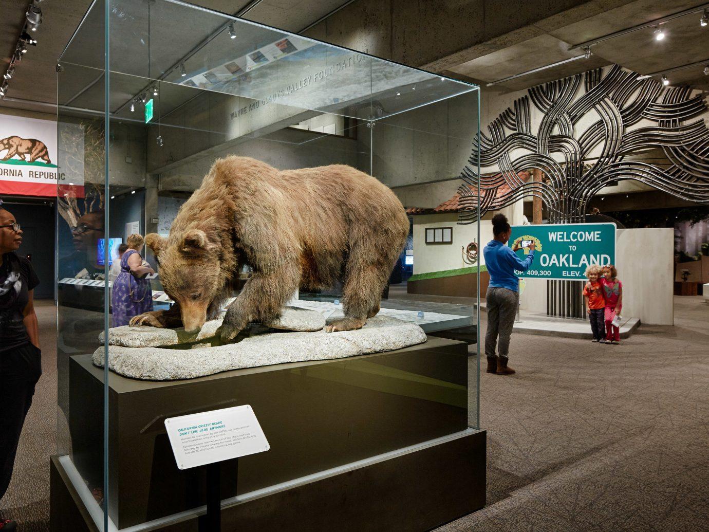 Trip Ideas indoor ceiling fair art tourist attraction exhibition mammal