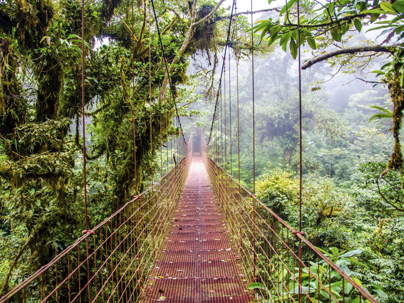 Trip Ideas tree habitat outdoor vegetation building Nature bridge rainforest natural environment Forest wilderness ecosystem old growth forest botany Jungle woodland wetland wooded