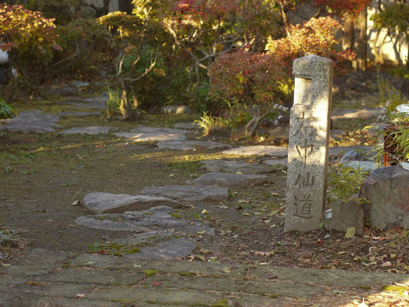 Trip Ideas outdoor tree ground grass season autumn leaf woodland Garden curb